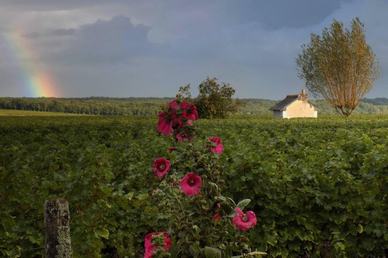 Photos saisonni res - L univers du jardin les rues des vignes ...